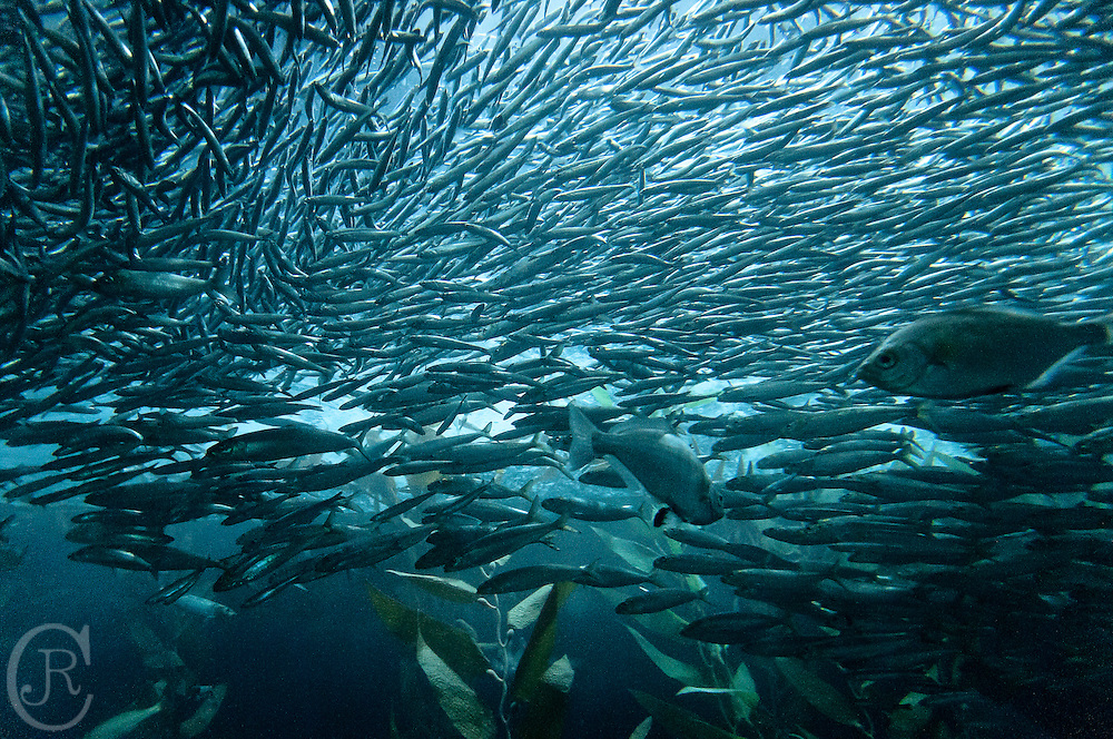 A school of fish in the mysterious waters