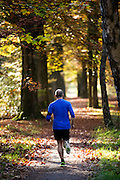 Bij Austerlitz rent een man door het bos op een mooie herfstdag.<br /> <br /> Near Austerlitz a man is jogging in the woods on a nice autumn day.