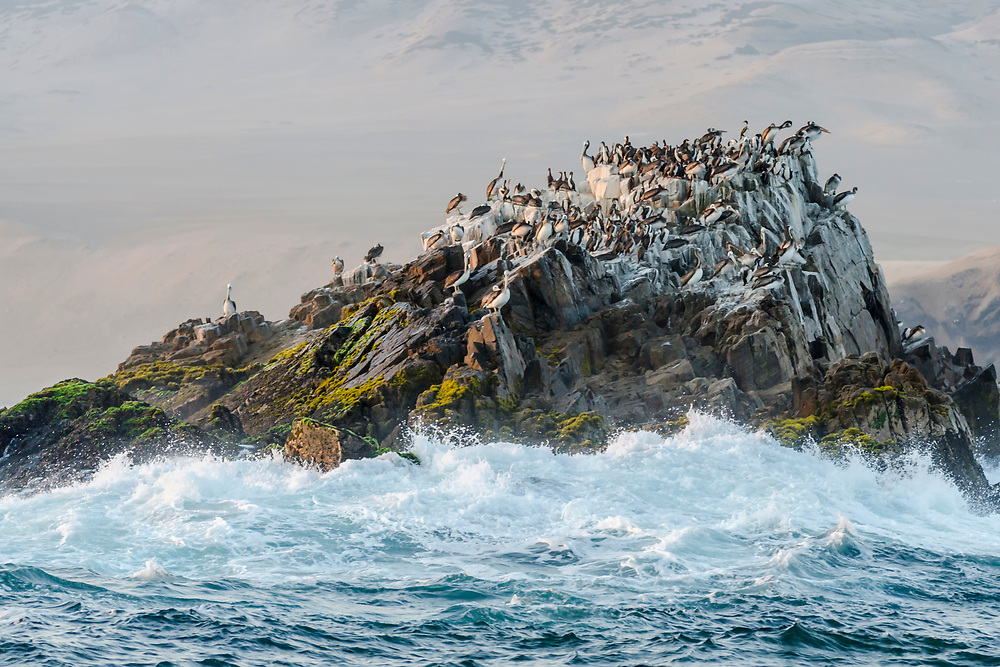 Isla San Lorenzo, Peru