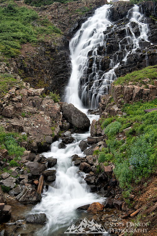 Located at an elevation between 11,500 and 12,000 ft, Yankee Boy Basin has amazing wildflowers and some great waterfalls.