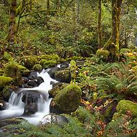 Dry Creek Falls, Columbia River Gorge, Oregon.