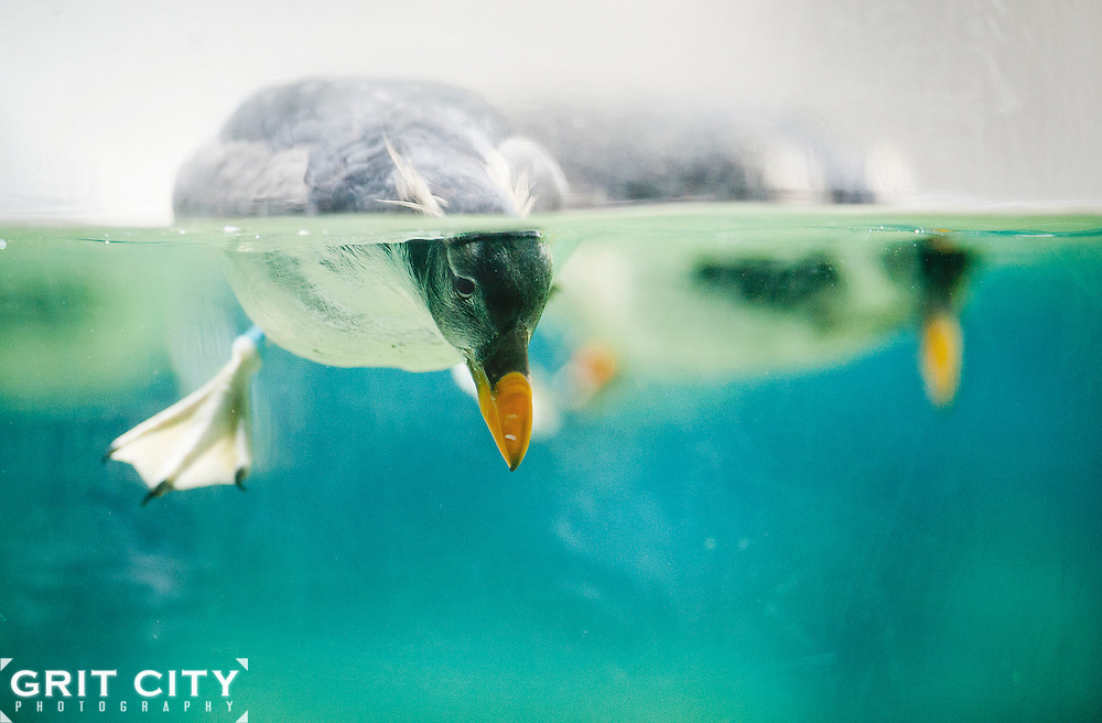 Grit City Photography for Point Defiance Zoo & Aquarium.