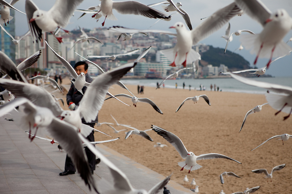 Man feeding seagulls at Haeundae Beach, Busan, South Korea, Republic of Korea, KOR, 13 February 2010.