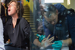 © licensed to London News Pictures. London, UK 19/08/2013. A police officer removing superglue from the hands an anti-fracking protester who superglued herself to the entrance of Bell Pottinger PR company in Holborn, London to protest against the fracking in Balcombe. Photo credit: Tolga Akmen/LNP