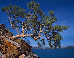 A small tree hangs over the water's edge in beautiful Dugong Bay on the Kimberley coast.