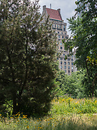 The Dene Slope, a native meadow in Central Park.