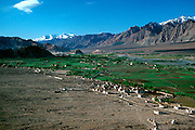 INDIA, LADAKH fertile farmland in the valley of the  Indus River, headwaters in the Himalaya Mountains