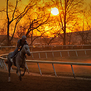 Horses training at the Churchill Downs Trackside training center on Saturday March 17, 2012 in Louisville, KY