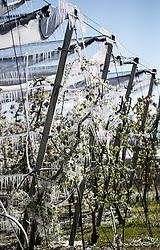 THEMENBILD - die österreichischen Bauern kämpfen dieses Jahr wieder einmal mit dem Frost. Bereits die letzten zwei Jahre gab es große frostbedingte Ernteausfälle und auch dieses Jahr wird es Sie auf Grund der derzeitigen kalten Temperaturen wieder geben. Mit speziellen Maßnahmen wie der Frostschutzberegnung (siehe Eis im Bild) versuchen die Bauern jedoch den Schaden zu begrenzen // Austrian farmers are fighting this year again with low temperatures. Already the last two years there were big crop failures and also this year it seems to be the same due to the current cold temperatures. With special measures such as the antifreeze protection (see picture) the farmers try to limit the damage, Rum, Austria on 2017/04/21. EXPA Pictures © 2016, PhotoCredit: EXPA/ Jakob Gruber