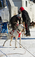 Friday's Open Class race at the 86th annual Laconia World Championship Sled Dog Races.  Karen Bobotas for the Laconia Daily Sun