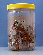 glass jar with rotten moldy produce against blue background