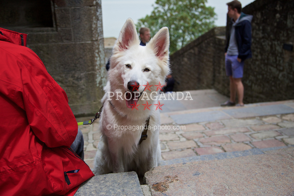 LE MONT-SAINT-MICHEL, FRANCE - Tuesday, June 28, 2016: A white dog during a Wales staff visit Mont Saint-Michel during the UEFA Euro 2016 Championship. (Pic by David Rawcliffe/Propaganda)