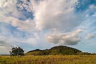 An elevated bush island in the South Rupununi Savanna, Guyana.