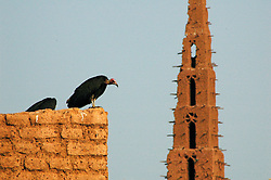 "BURKINA FASO, Bani, 2007. Vultures loom over the empty courtyard of the ""Grand Mosquee"" in Bani."