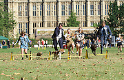 Westminster Dog of the Year 2016 <br /> in Victoria Tower Gardens, London, Great Britain <br /> 8th September 2016 <br /> organised by The Kennel Club and Dogs Trust together with dog loving MPs and Peers. <br /> <br /> <br /> Michelle Thomson MP with Benjy <br /> <br /> <br />  Liz Saville Roberts MP with her rescue dog Fiona <br /> <br /> <br /> Craig Williams MP with Winston <br /> <br /> Anna Turley with Clem <br /> <br /> Craig McKinlay MP with Libby <br /> <br /> Photograph by Elliott Franks <br /> Image licensed to Elliott Franks Photography Services