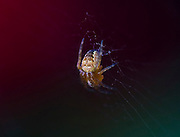 Spider on its web.