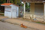 Dog in La Palma, Pinar del Rio, Cuba.