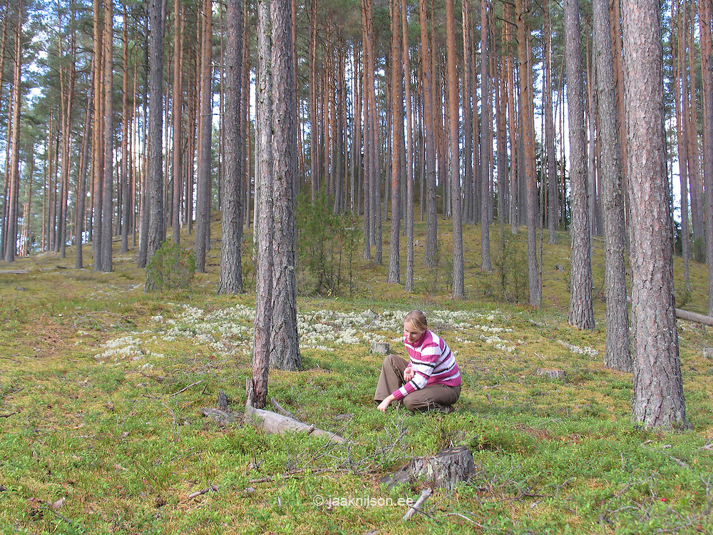 Young Woman Picking Cowberrys, Estonia, Europe