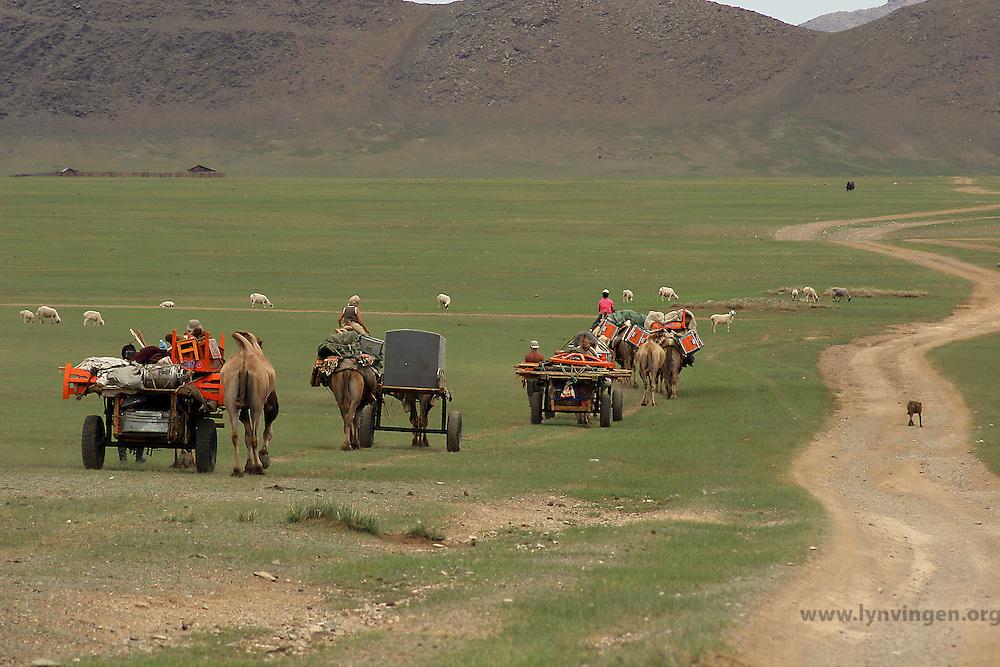 Kamelkaravane, camel caravan