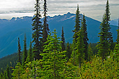 MT. REVELSTOKE NATIONAL PARK