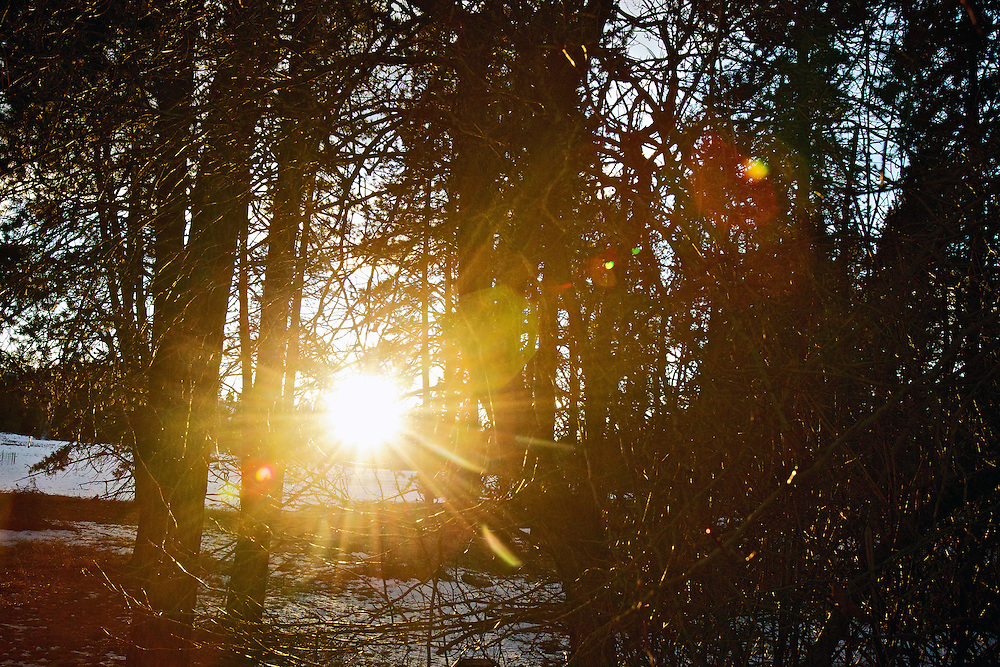 The setting sun shines through the trees and brush Thursday, Jan. 26, 2012 near Hayden Lake, Idaho.