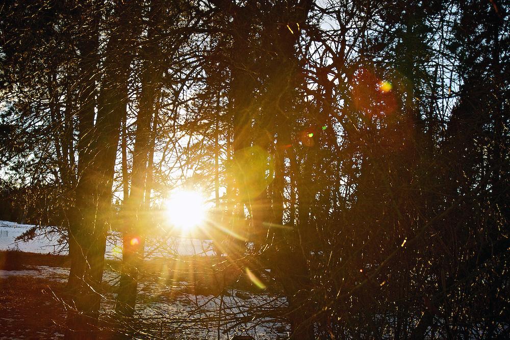 The setting sun shines through the trees and brush Thursday, Jan. 26, 2012 near Hayden Lake, Idaho.