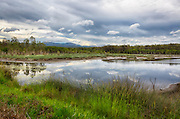 A wetland on Australia's Sunshine Coast.