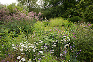 Orlaya grandiflora (white laceflower) and Thalacitrum growing in a mixed bed around a pond in Derry Watkins' Special Plants Garden, Chippenham, Somerset, UK