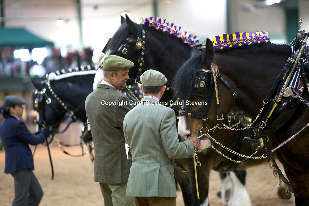 RIGHT   Mike Bottomer and FIFIELD ADMIRAL<br /> Winner  Traditional Harness Class<br /> Winner  Best Dressed Groom of the Show
