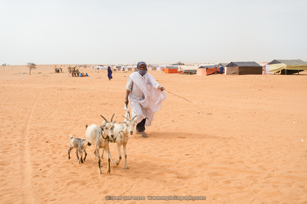 A man herds goats along the boundary between the newest section of the Mbera refugee camp (right) and older sections. As of 2 March 2013 the newest section of the Mbera refugee camp for Malian refugees in Mauritania had no water points and no latrines. In addition, many families had been allocated tent locations, but had not received proper tents - in many cases the tent frames were covered with makeshift fabric, or families were staying with friends or relatives while they awaited the arrival of their tents.