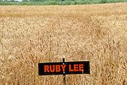 2012 Wheat Variety Trials