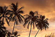 Sunset with Palm Trees, Moorea, French Polynesia