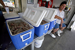 07 May 2010. Westwego, Louisiana. <br /> Wayne Hebert of Ruth's seafood at the Westwego Fish market just outside New Orleans. All seafood prices have risen 25% in the past 7 days alone as stocks run low thanks to closed fishing grounds affected by oil pollution. Today was the opening day of the inshore shrimp season. The season was closed before it could open thanks to BP's disastrous environmental catastrophe out in the Gulf of Mexico. Approximately 210,000 barrels of oil per day is leaking uncontrollably into the Gulf because of the explosion and collapse of the Deepwater Horizon drilling platform 46 miles out to sea. The closure of fishing grounds both east and west of the Mississippi river outflow is crippling thousands of local fishermen and all affiliated businesses and families who rely on the seafood industry. None of the shrimp or other seafood offered at the market are fresh catch from today. Everything has been through the IQF (Instant Quick Freeze) process and is seafood caught earlier in the season and brought from storage freezers in Venice and Grand Isle. Stocks are running low. With no new catches, the market will be forced to rely on farmed shrimp shipped in from Texas and Georgia. Local traders refuse to stock Chinese import fish raised with growth hormones, pesticides, fungicides and other contaminants widely found in Chinese farm raised seafood. Many fear losing their jobs and everything they own as a result of BP's Gulf Coast environmental disaster.<br /> Photo credit; Charlie Varley/varleypix.com