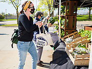 09 MAY 2020 - DES MOINES, IOWA: A person shops for produce in what was supposed to be a drive through farmers' market in Des Moines. People who walked up voluntarily social distanced. The Governor allowed farmers' markets across the state to reopen last weekend, but limited them to selling just food stuffs. They are not allowed to have entertainment or sell non-food items. Most farmers' markets in Iowa are taking a wait and see approach to reopening. The Downtown Farmers Market in Des Moines announced they won't reopen until July. Three vendors set up their own drive through farmers' market in the parking lot of Des Moines theatre Saturday. Hundreds of people got in line to buy fresh produce and artisan cheese. More than 11,670 people have tested positive for COVID-19 in Iowa and more than 250 have died from the disease.          PHOTO BY JACK KURTZ