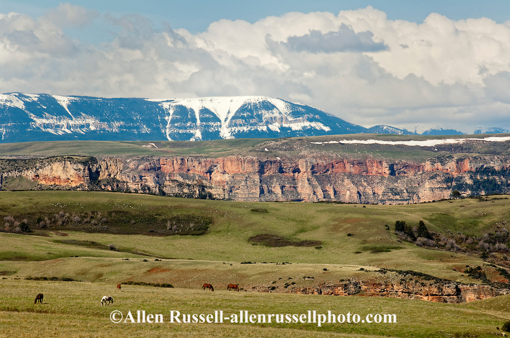 Bighorn Canyon National Recreation Area, Montana, Horses Grazing, Crow Indian Reservation, Bighorn Mountains