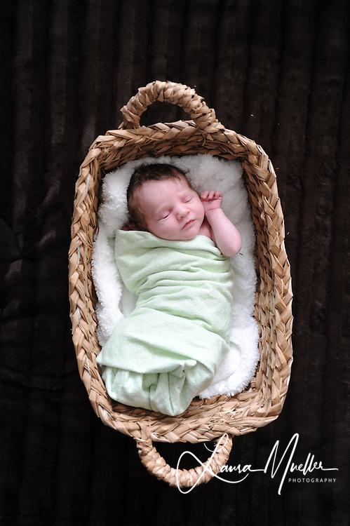 11/18/2010 Addellyn Elizabeth - 10 days old. photos © Laura Mueller 2010