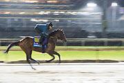 November 1-3, 2018: Breeders' Cup Horse Racing World Championships. Game Winner