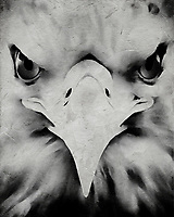 When you look upon this fine art illustration of an eagle by Jan Keteleer, one can be left with a feeling of determination. Simply by looking deeper into this the details of this powerful animal, we can get a sense of why many see the eagle as a symbol of such. Suitable for anyone who loves such ideas, or simply animals. –<br />