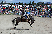 Te Anau rodeo, Southland, NEW ZEALAND. 30/12/2010