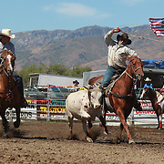 Father and son team of Don Tisdall and Roy Tisdall in action during the Open Team Roping competition at the Wanaka Rodeo. Wanaka, South Island, New Zealand. 2nd January 2012