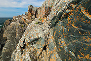 Colonies of crustose lichens on rocks along Lake Superior<br /> Pukaskwa National Park<br /> Ontario<br /> Canada