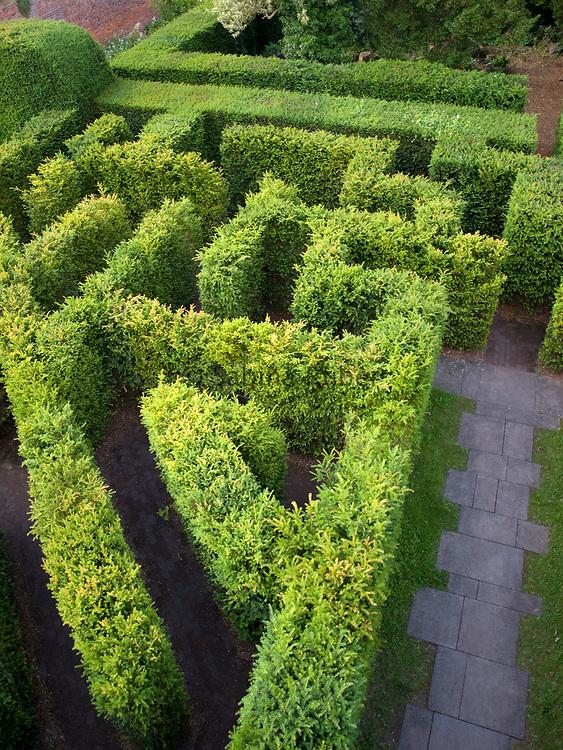 Taxus baccata - English yew - maze, Hampton Court, Herefordshire