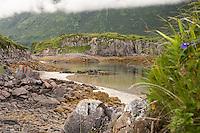 A small beach and island in Geographic Harbor, Katmai National Park, Alaska.