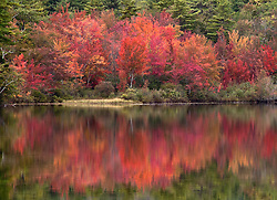 Fall color -- sugar maples -- on the shores of an unnamed lake, off Highway 113, south of Conway.