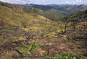 Wildland Fire, Prescribed fire, fire Recovery, renewal, Pinnacles National Monument, California , Pinnacles National Park,