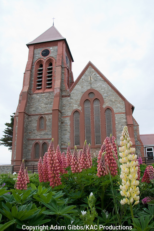 Christ Church Cathedral; Falkland Islands; Hadassah Bay; Lupins; Port Stanley; lupinus; wildflowers