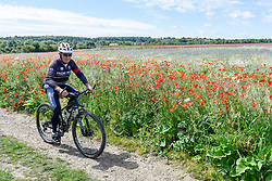 © Licensed to London News Pictures. 11/06/2017. London Colney, UK. A mountain biker rides by poppies and other wildflowers which are in bloom in a field in London Colney, near St Albans.  Lying near the busy M25 motorway that encircles the capital, the flowers are putting on a spectacular show as the traffic passes by. Photo credit : Stephen Chung/LNP