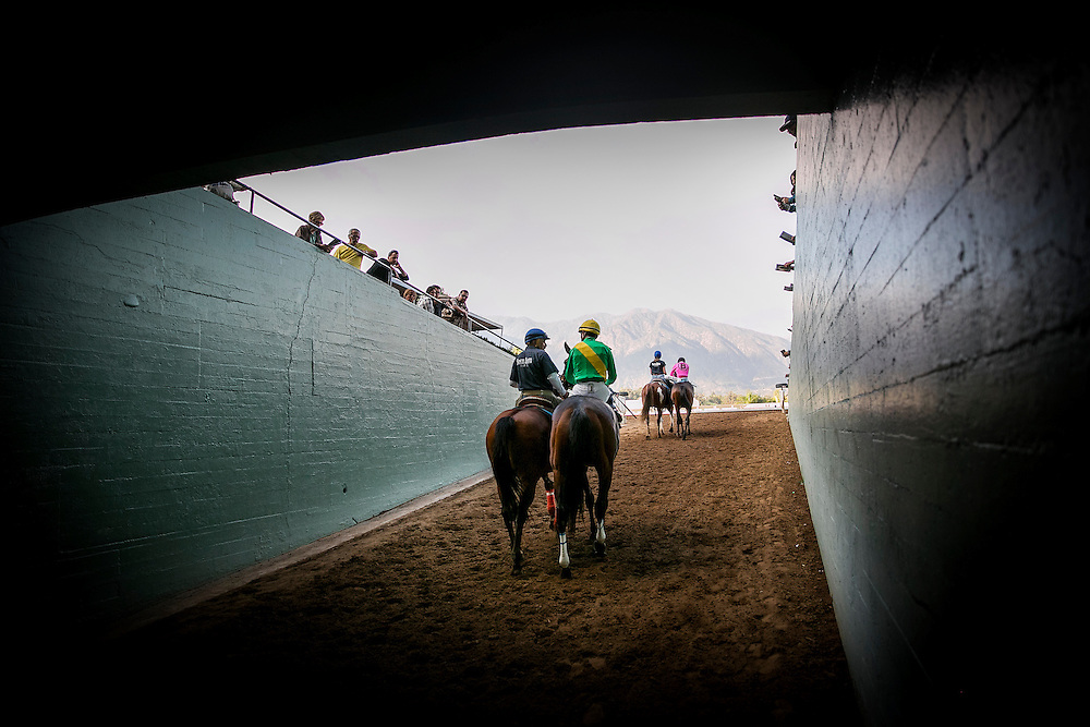 January 31 2015: Light the City walks to the track in the Las Virgenes Stakes at Santa Anita Park in Arcadia CA. Alex Evers/ESW/CSM