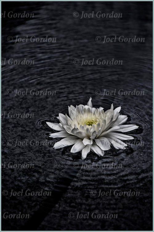 White flowers floating on top of fountain of AIDS Memorial.