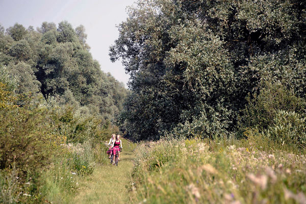 Nederland, Millingen, 25-7-2012Fietsesr fietsen over een pad door de Millingerwaard. Het is een warme zomerse dag.De kant van het pad staat vol bloeiende bloemen. Dit gebied in de ooijpolder is zeer in trek als recreatie en natuurgebied. Trekt in de zomer veel toeristen,Foto: Flip Franssen/Hollandse Hoogte
